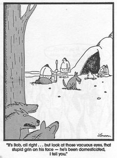 He's  been  domesticated  I tell you! ---    The far side by Gary Larson