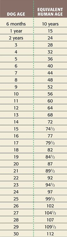 Dog age vs human age; just in case anyone was wondering how old their dog was in human years.