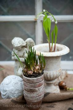 FLOWERS by titti & ingrid - Spring Bulbs. Styling and photography © Titti Malmberg for HWIT BLOGG