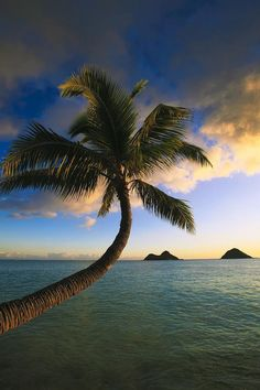 ✮ Hawaii, Oahu, Kailua, Lanikai - Sunrise and coconut palm tree..... - Jenny Ioveva - Google+
