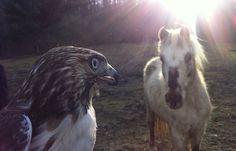 Hawk & Horse | Cold Antler Farm