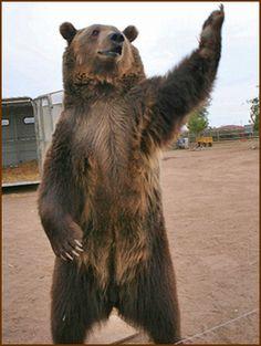 bear hoodie - Google Search