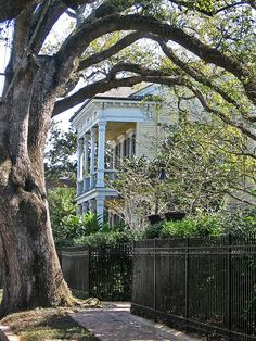 I just love, love, love the way this tree frames this wonderful, gorgeous house in the Garden District, New Orleans, Louisiana.
