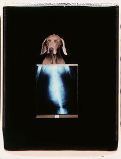 William Wegman, X-Ray Fay, 1993