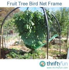 Fruit Tree Bird Net Frame
