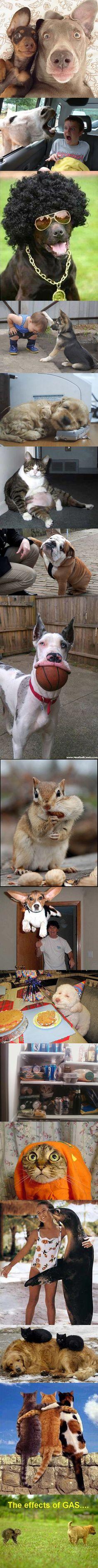 Funny Animal LoL ...