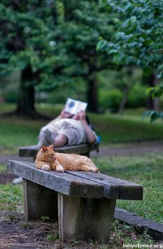 Japanese Summer -- Reading in the Park I Love Cats, Cute Cats, Funny Cats, Crazy Cat Lady, Crazy Cats, Bonheur Simple, Photo Animaliere, Red Cat, Orange Cats