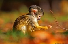 Baby Affe und sein Mais, Tobias deHaan