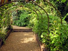 Heavy edging timbers and crushed stone walkway  ~*~ Will Giles' Exotic Garden