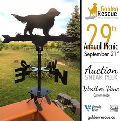 Save the date and get ready to load up the car and your Goldens for an action-packed day at the majestic Viamede Resort ~ nature's paradise in the Kawarthas. Golden Events, Weather Vanes, Rainbow Bridge, Golden Dog, Four Legged, Rescue Dogs, Life Is Good, Picnic, This Is Us