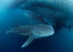 fauna silvestre del ecuador y galapagos