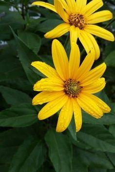 Diy Aloe Vera Gel, Herbalism, Herbs, Good Things, Education, Plants, Free, Top, Books
