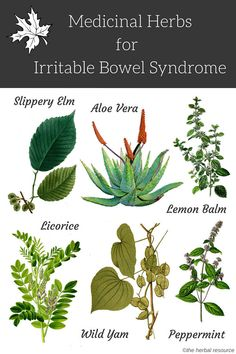 Holistic Remedies Herbal Remedies For IBS - - Irritable Bowel Syndrome - Health Properties, Active Ingredients, Benefits and Side Effects of Medicinal Herbs Used as Herbal Remedies for IBS or Irritable Bowel Syndrome Treatment Holistic Remedies, Natural Health Remedies, Natural Cures, Herbal Remedies, Natural Healing, Healing Herbs, Medicinal Plants, Natural Medicine, Herbal Medicine