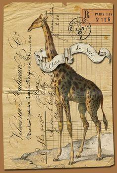 Buffon Giraffe