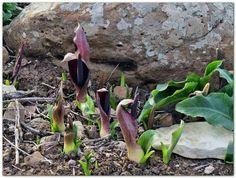 Wild flowers in Sardinia