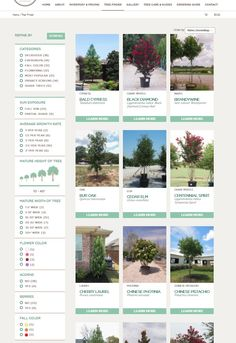 Tree Finder for North Texas Trees & Large Shrubs / Find the perfect tree & shrub for your project / Treeland Nursery Evergreen Trees, Trees And Shrubs, Trees To Plant, Tree Base, Growing Tree, Plant Care, Texas, Nursery, Flowers