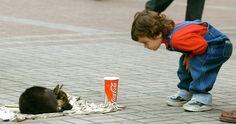 Que se creen albergues para los animales callejeros