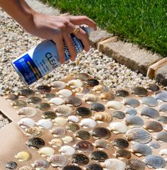 Spray sea shells with Painter's Touch Gloss in Crystal Clear to return the…
