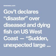 "Gov't declares ""disaster"" over diseased and dying fish on US West Coast — ""Sudden, unexpected large decreases"" in population — Scientists ""mystified… stumped"" — Officials: ""Environmental disaster… Devastating… Alarming… Dire"" (VIDEO) « ENENews.com – Energy News"