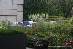 A close up of the seating and planting of The Telegraph Garden, designed by Marcus Barnett and built by crocus.co.uk. As you can see in this photograph, the planting in The Telegraph Garden is separated into blocks of primary colours. Marcus Barnett's design was inspired by his childhood in the countryside, Marcus used the process of extreme simplification to represent the harmony and order of nature and his remembered surroundings.