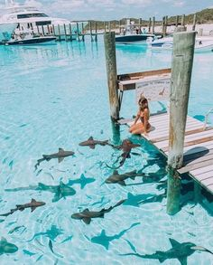 Swimming with sharks in Compass Cay Bahamas. These sharks, brown in color and with a broad head, are totally harmless. Nothing between sharks Vacation Places, Dream Vacations, Vacation Spots, Best Tropical Vacations, Beach Aesthetic, Travel Aesthetic, Adventure Aesthetic, Water Aesthetic, Les Bahamas