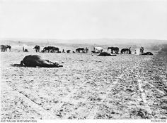 Dead horses lie on the ground near a line of soldiers and other horses after the Battle of Beersheba. They were probably killed during the charge of the Light Horse Brigade. War Horses, Ww1 Photos, Lest We Forget, World War One, Aussies, West Africa, Armed Forces, Soldiers, Ww2