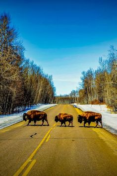 Here is some inspriation for day trips from Edmonton, Alberta. Canadian Travel, Visit Canada, Day Trips, Good Day, Adventure Travel, Things To Do, Animals, Buen Dia, Things To Make
