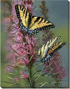 F830855085:Tigertails II-Butterflies - Wrapped Canvas by Scot Storm