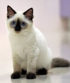 Novelty & Special Use Beautiful Gray Cat Bus Cartoon Plush Coin Wallets Cute Jiji Cat Pet Jiji Black Cat Purse Mobile Phone Bag Drawstring Pocket Plush Bag Driving A Roaring Trade Costume Props