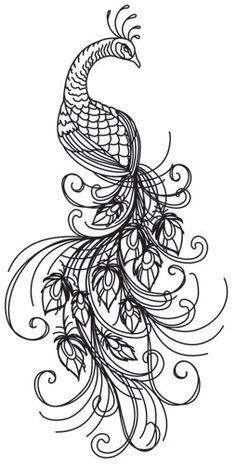Dibujos AVES para colorear, plumas de PAVO REAL para