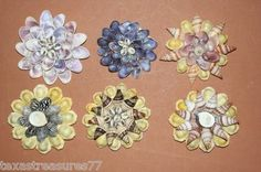 (6) Beautiful, Large, Seashell Flowers, Craft, Shell Craft, Hobby, Jewelry Box