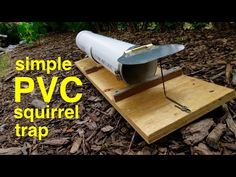 How to make ● a simple SODA BOTTLE HUMANE MOUSETRAP (that works!) - YouTube