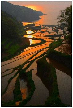 tanada (rice terrace):棚田