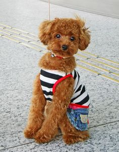Image Search Results for little things Little Dogs, Little Babies, Little Things, Baby Things, Teddy Bear, Purses, Toys, Image Search, Animals