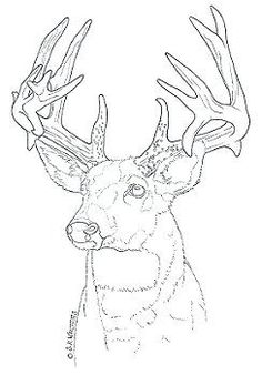 Free deer wood burning patterns woodworking projects plans for Pyrography templates free