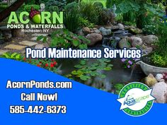 Hire the pros at Acorn Ponds & Waterfalls to clean your pond and prevent future repairs or problems in your Rochester, Monroe County Western New York (NY) water feature. Backyard Water Feature, Ponds Backyard, Pond Algae, Pond Cleaning, Outdoor Waterfalls, Pond Maintenance, Pond Filters, Pond Water Features, Waterfall Fountain