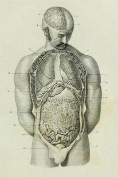 """Anatomía de """"Anthropologie, ou, Etude des organes, fonctions, maladies de l'homme et de la femme"""" (1848)"""