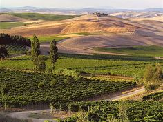 la-fortuna-vini-montalcino-34570.jpg 800×600 pixel