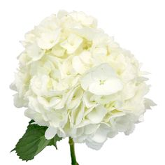 64 best white wedding flowers images on pinterest in 2018 white hydrangea ivory white flower express delivery mightylinksfo