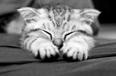 Clark Cat.