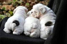 Awww!!! Cutiest puppies ever!