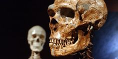 The mystery of ancient skulls with bullet holes - Nexus Newsfeed