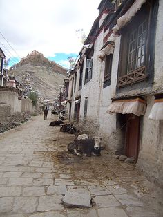Main Street Gyantze Tibet/ I like the cows tied outside the house !