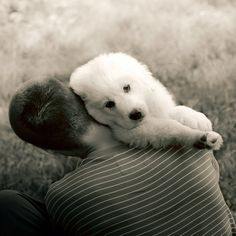 _ Love Is All, Polar Bear, My Photos, Faces, Dogs, Animals, Animales, Animaux, Pet Dogs