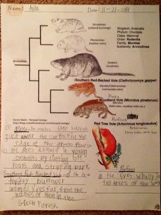 The Burgess Animal Book Chapter 1Free Printable Science Worksheets Animals To Color Charlotte Mason Homeschooling Curriuculum Teacher Resources
