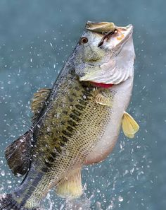 Want to catch more bass like this