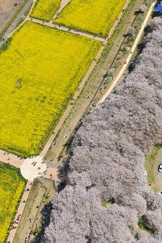 spring in Japan by Katsuya Noguchi #Aerial #Bird's-eye