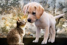 21 Things you need to know before using a #PetSitting Service! #CuddlesandTails Professional #PetServices #NewYork