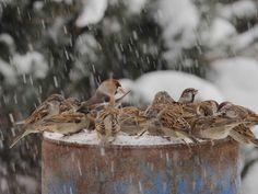 schůze ptačí...předseda Dlask..