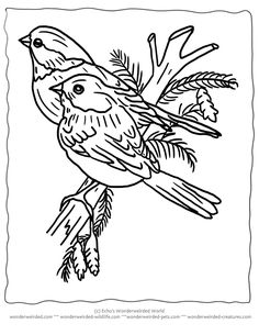 Free printable kid coloring page of bird craftalicious stitch